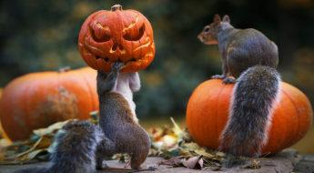 chto-snimat-na-halloween